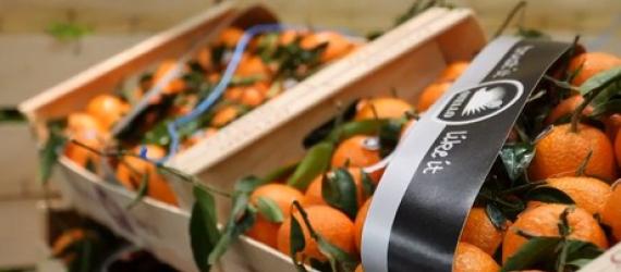 Houten verpakkingen kunnen elk materiaal vervangen